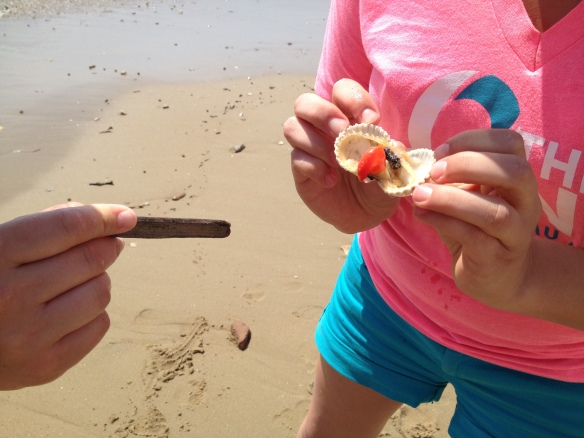 Courtney and Panc playing with a clam...that they may have (accidentally) killed.